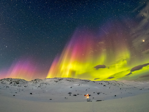 Aurora Borealis, wildlife and dogsledding in Swedish Lapland