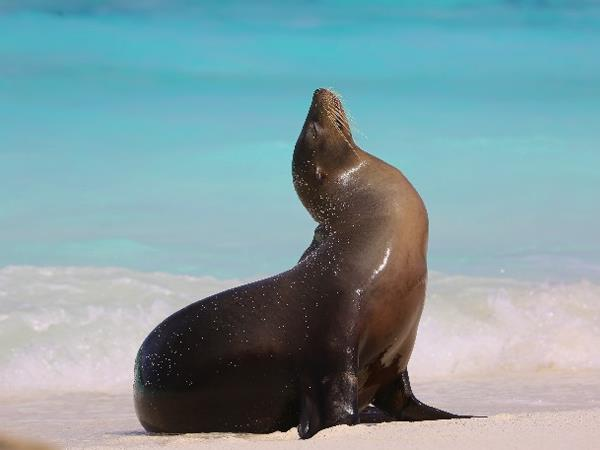 Galapagos Islands cruise, 10 days