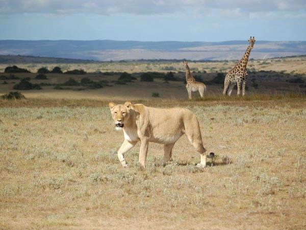 Veterinary internship in South Africa