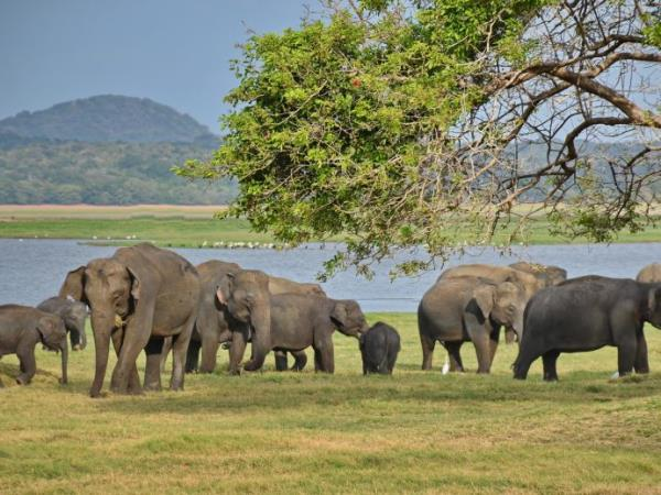 Sri Lanka Family Holidays