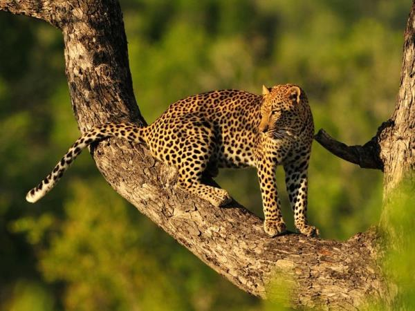 Tanzania migration safari holiday, tailor made