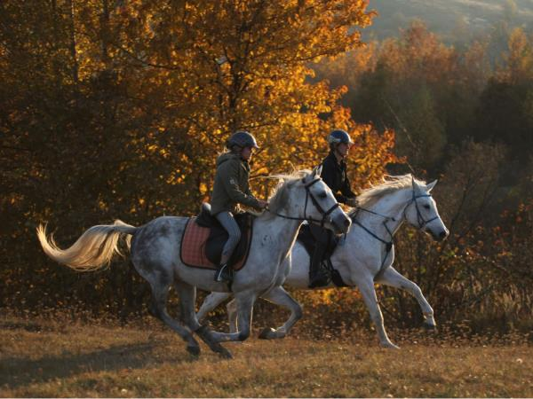 Centre based horse riding holidays in Romania