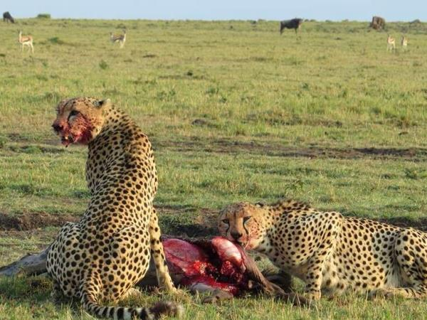 Kenya wildlife tour, tailor made