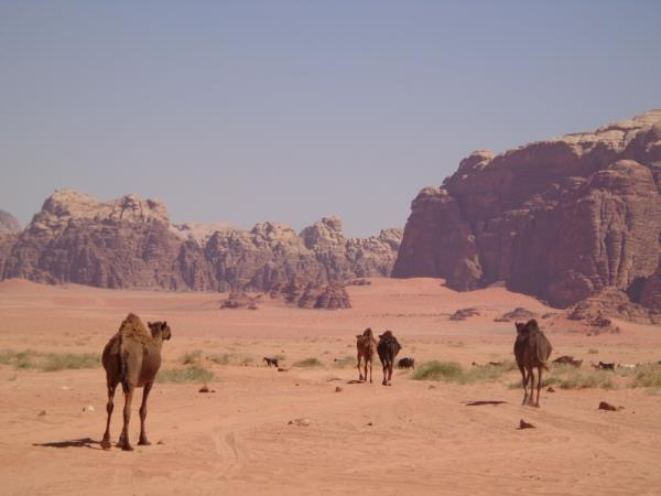Walking holiday in Jordan