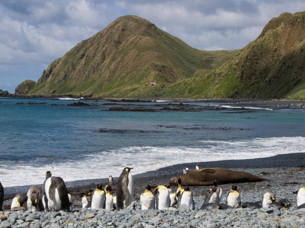 Antarctica cruise from Australia