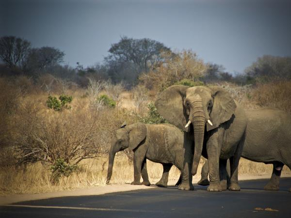 Wildlife justice internship in Malawi