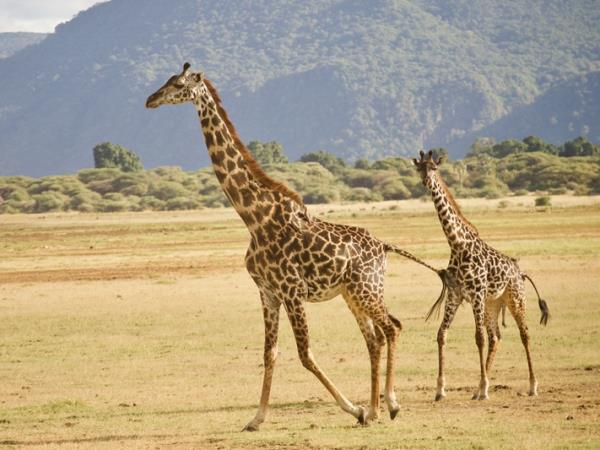 Serengeti, Selous and Zanzibar small group holiday