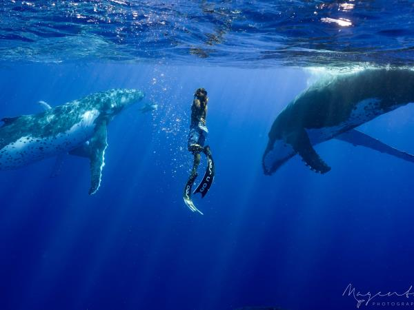 Swim with humpback whales in Tahiti