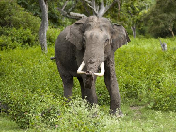Sri Lanka luxury wildlife holiday