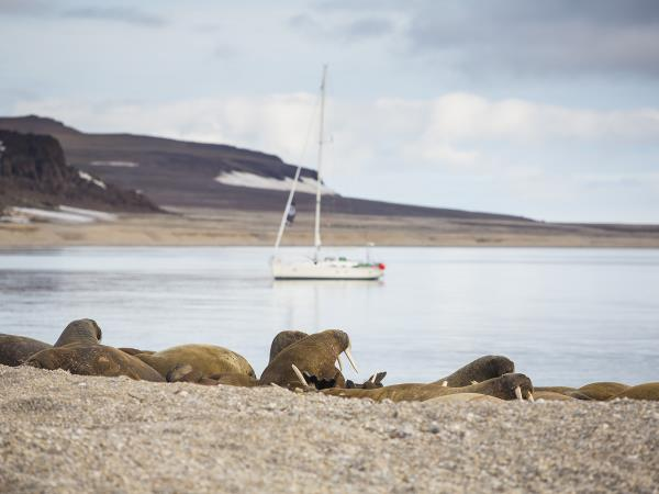 Arctic sailing holiday around Spitsbergen