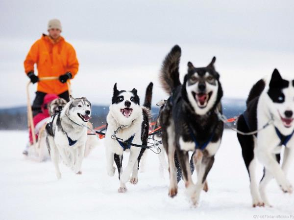 Finland husky safari holiday