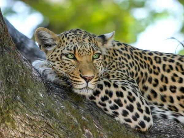 Zambia off the beaten track safari