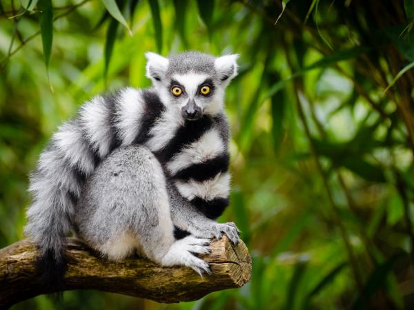 Off the beaten track holiday to Madagascar