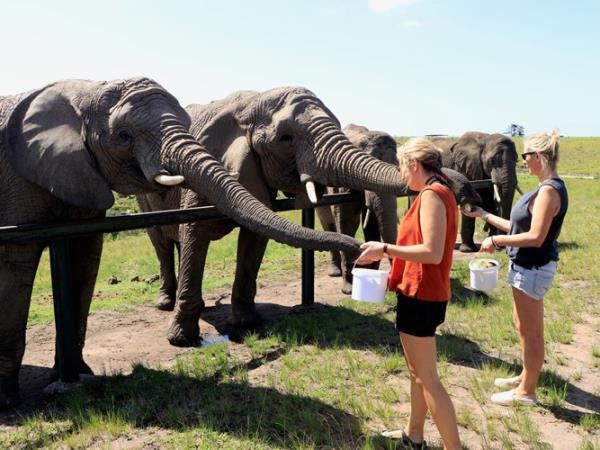 Volunteer with elephants in South Africa, 1 week