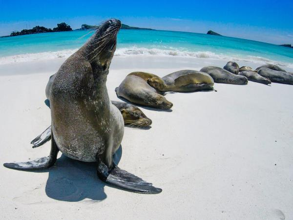 Galapagos cruise plus Ecuador and Peru