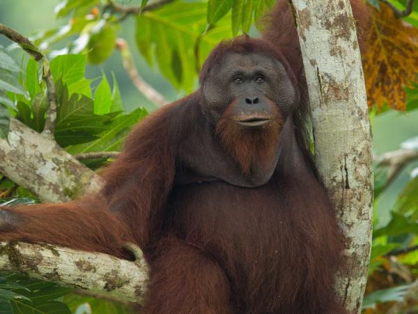 Borneo wildlife tour