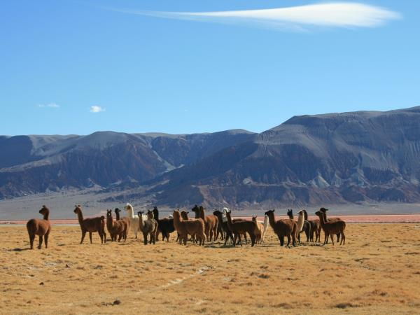 Argentina desert tour, extreme north