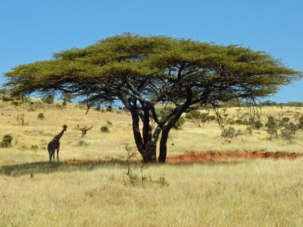 Luxury Kenya holiday