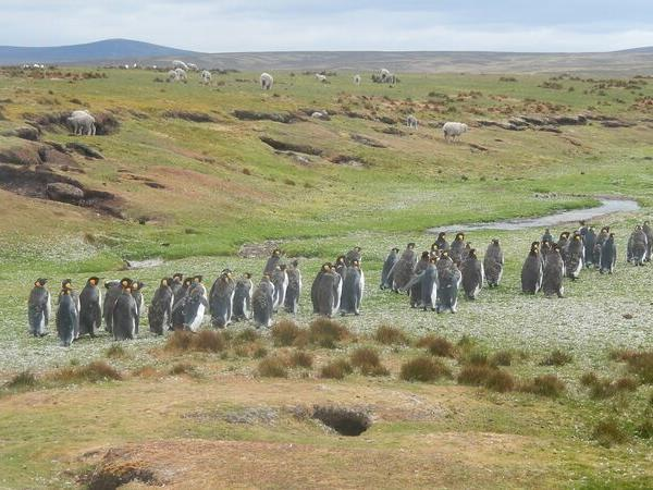 Falkland Islands cruise in 2020