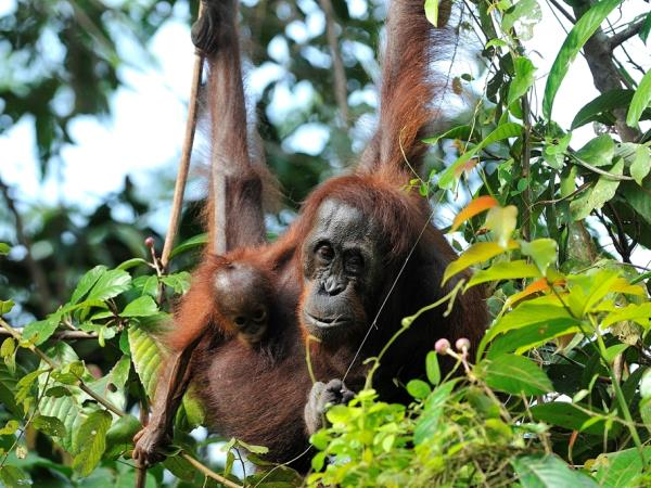 Over 40s volunteer trip in Borneo