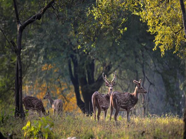 Kanha and Pench NP tour in India
