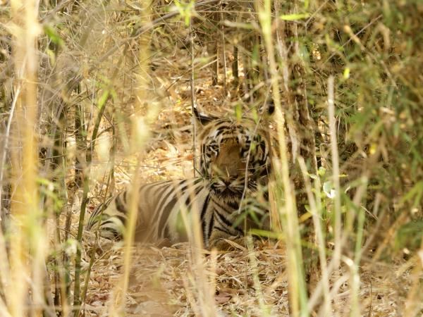 West-central India wildlife holiday