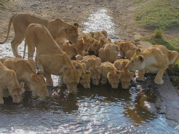 Serengeti holiday in Tanzania, the big five