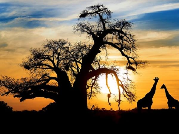 Botswana luxury honeymoon safari
