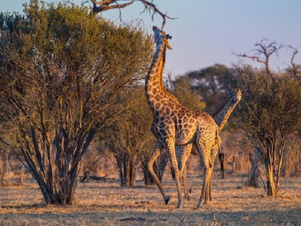 Botswana luxury safari holiday