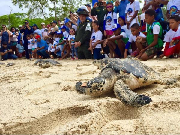 Turtle conservation in Colombia