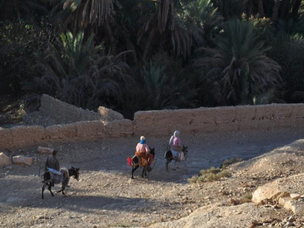 Morocco camel trekking holiday