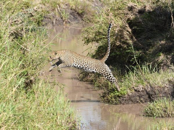 Northern Tanzania fly-in luxury safari