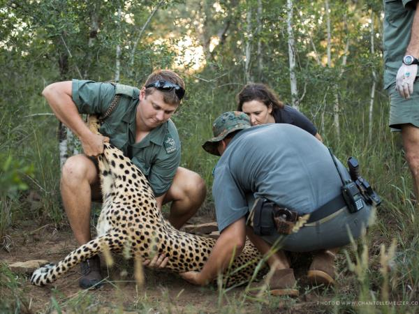 Wildlife conservation course in South Africa