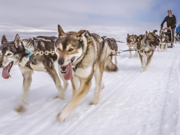 Husky safari in Finland