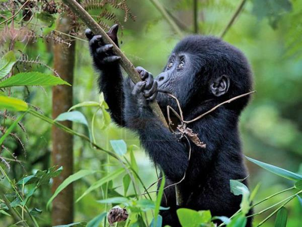 Rwanda tour and luxury gorilla safari