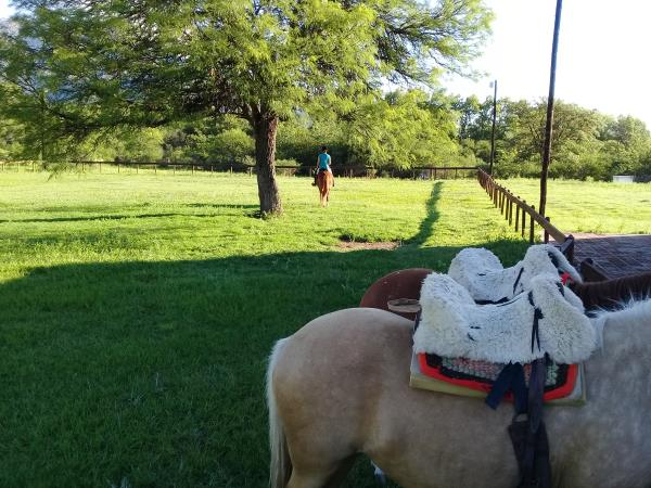Learn to ride a horse in Argentina