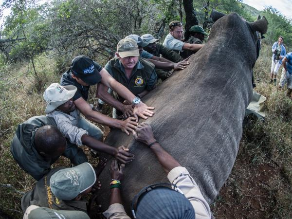 Wildlife conservation safari in South Africa