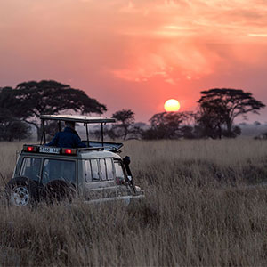 Where to go on a Short Safari Holiday