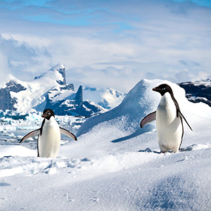 Antarctica & Falklands holidays guide