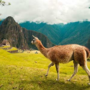 100 years of Machu Picchu