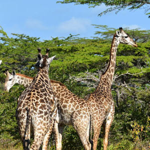 Best time to visit Selous