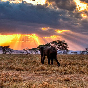 Safaris in Tanzania travel guide