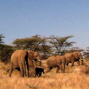 Best time to visit Kenya