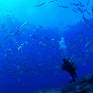 Marine conservation travel guide