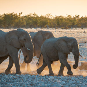 Things to see & do in Etosha