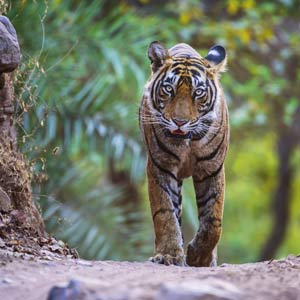 Ranthambore National Park travel guide