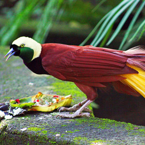 Bird watching in Papua New Guinea