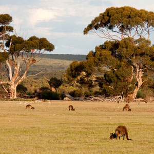 Things to see & do in South Australia