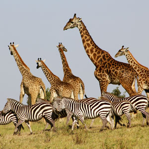 Things to see & do in the Masai Mara, Kenya