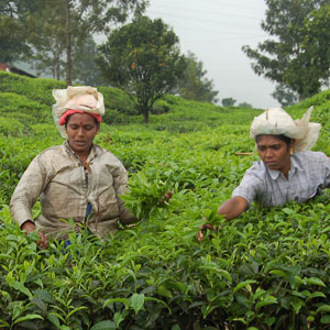 Kerala spices & tea plantations
